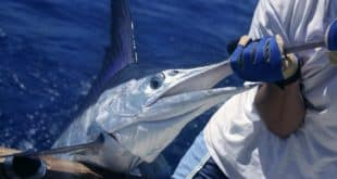 Reasons to try sport fishing in los cabos