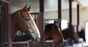 GlobeQuest Travel Club Recommends: Cuadra San Francisco Equestrian Center