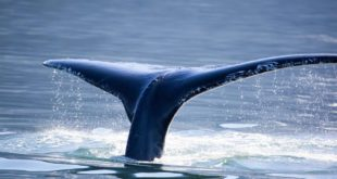 GlobeQuest Travel Club Invites Guests to Catch Cabo Whale Watching Season