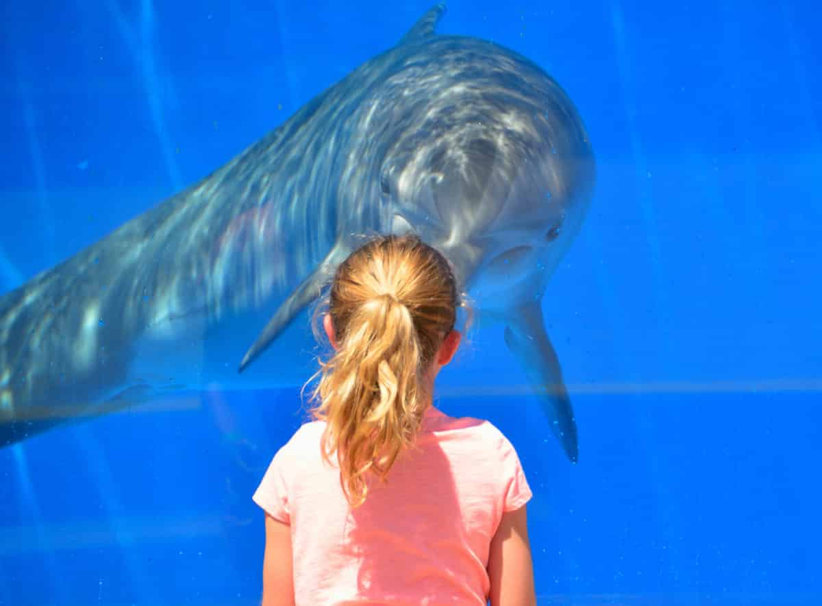 visit ocean world in puerto plata