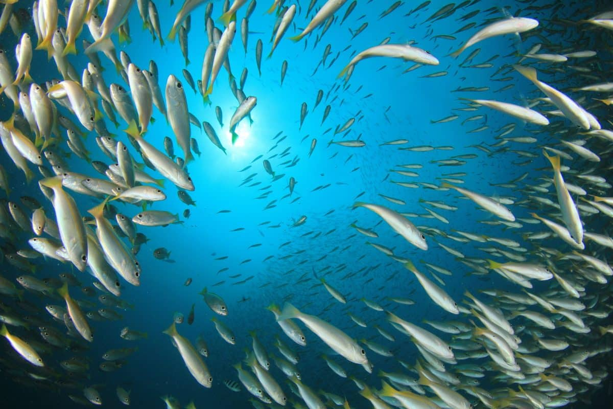 Top Reasons to Visit Cabo Pulmo National Marine Park (2)