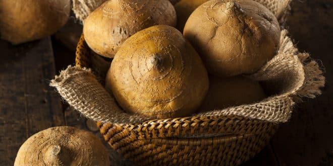 Raw Organic Brown Jicama in a Basket
