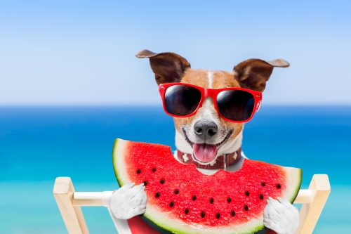 fruits that your dog can eat