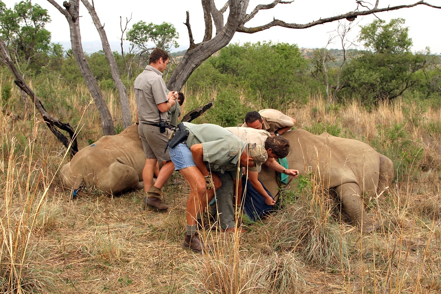 Poachers in national park trying to help elephants