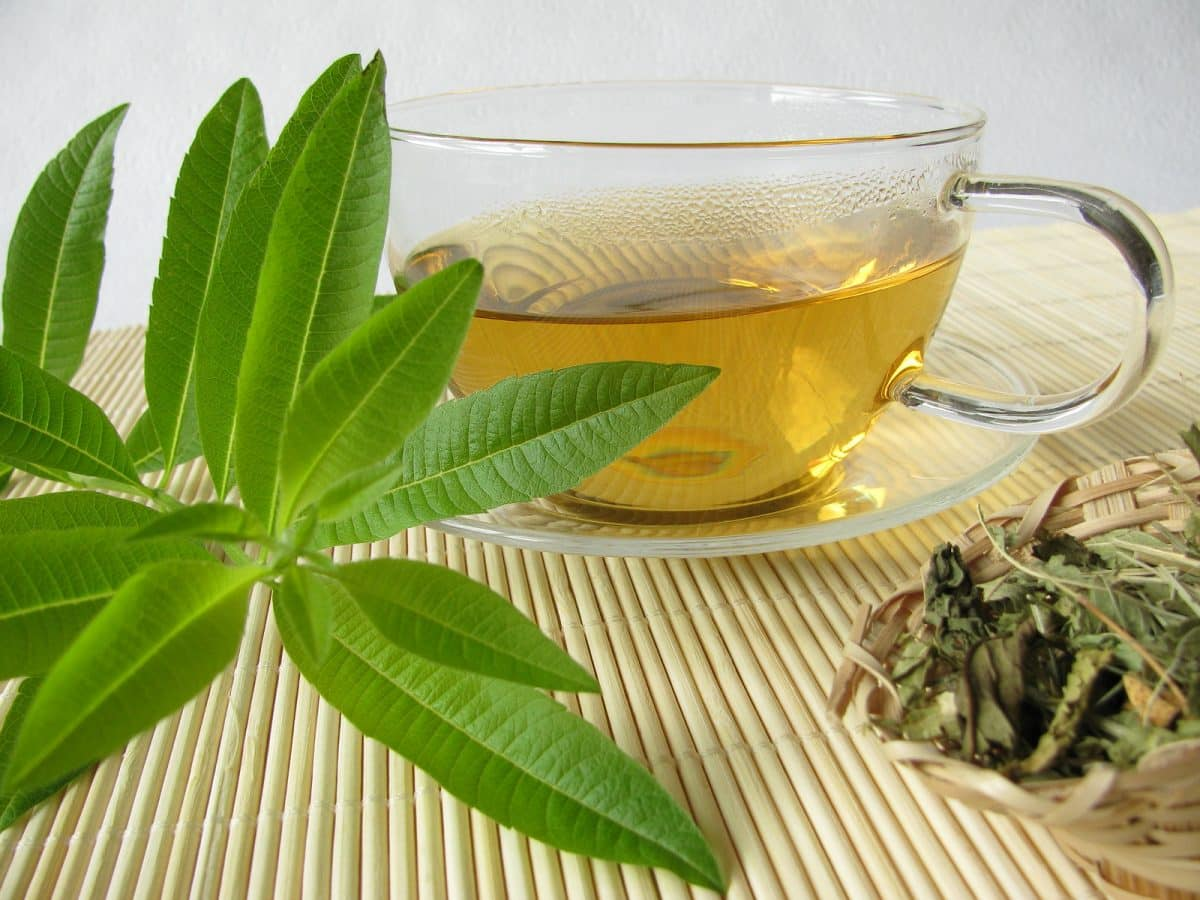 The Benefits of Lemon Verbena Tea 1