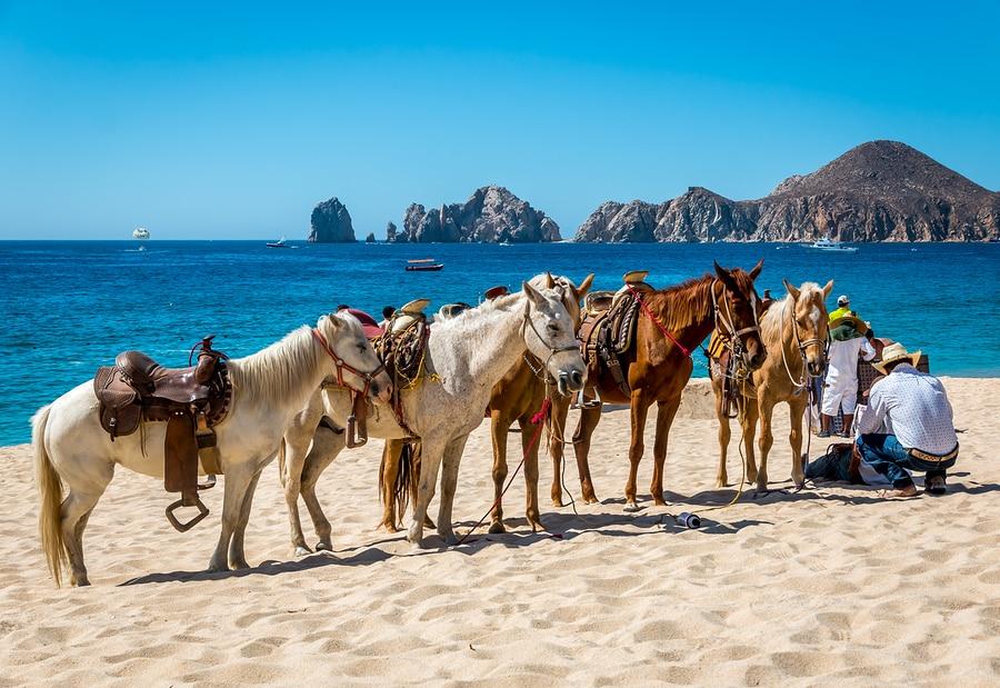 A Mexican vaquero tends to his horses on a resort beach in Cabo San Lucas