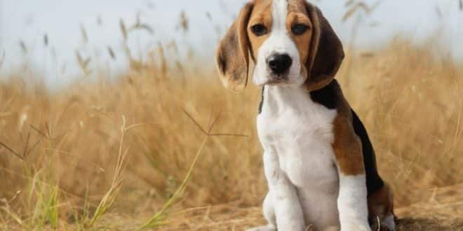 The Top Dog Breeds for Scent Detection