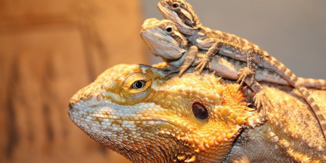 The Most Unusual Pets You Can Safely Own