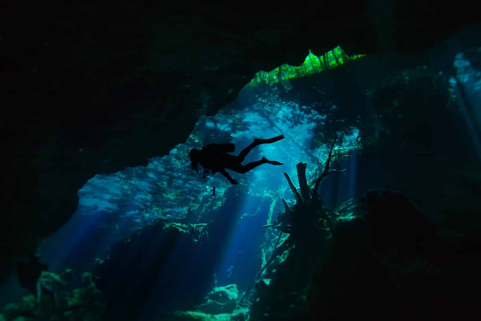 Diving in the cenote with Astuto Travel