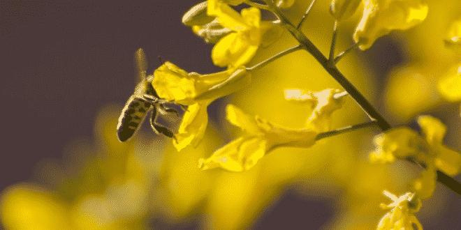 Tips for Building a Bee-Friendly Garden