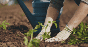 How to Grow the Best Vegetable Garden Possible