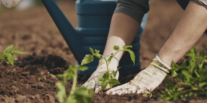 How to Grow the Best Vegetable Garden Possible