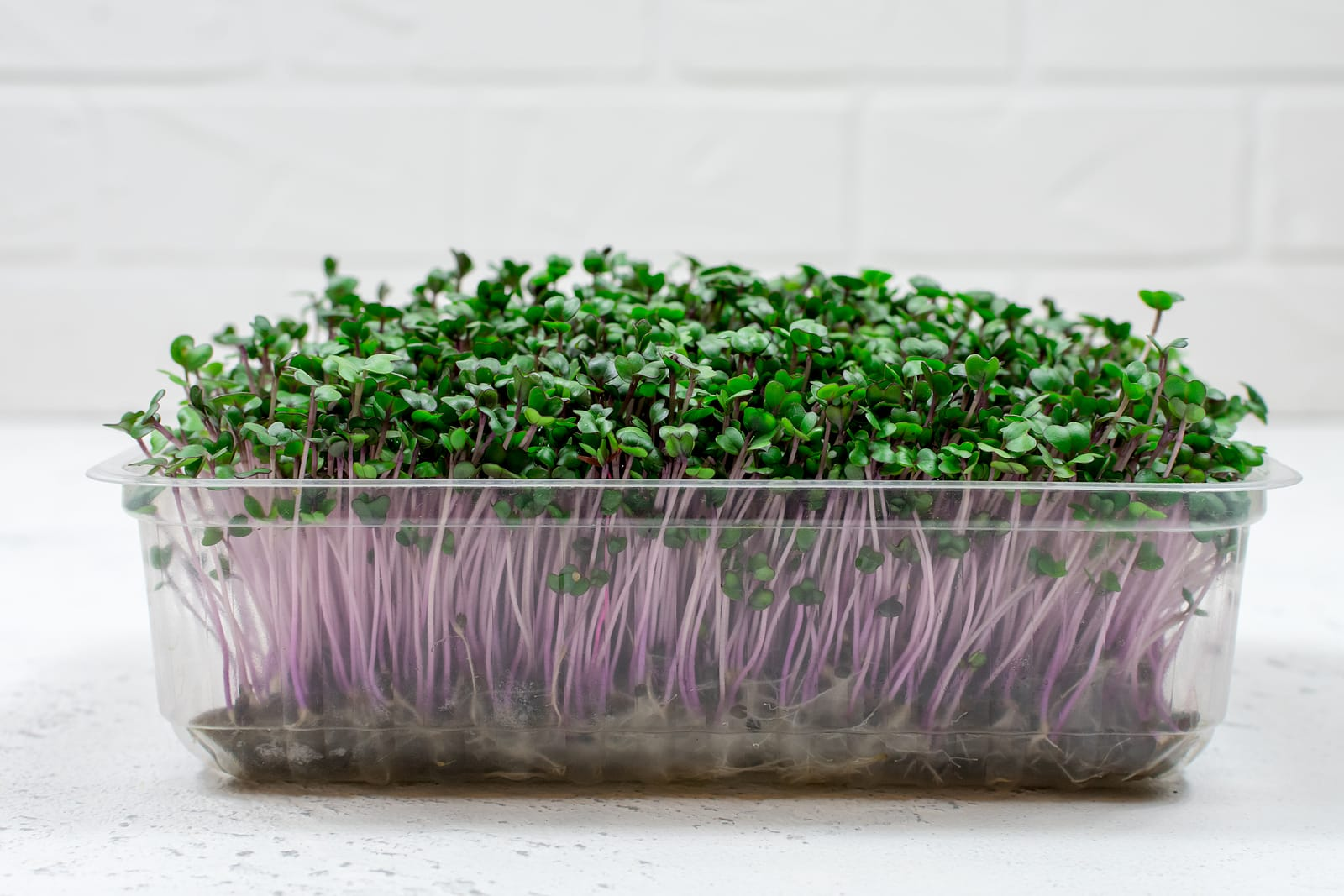 Fresh organic sprouts in a plastic container