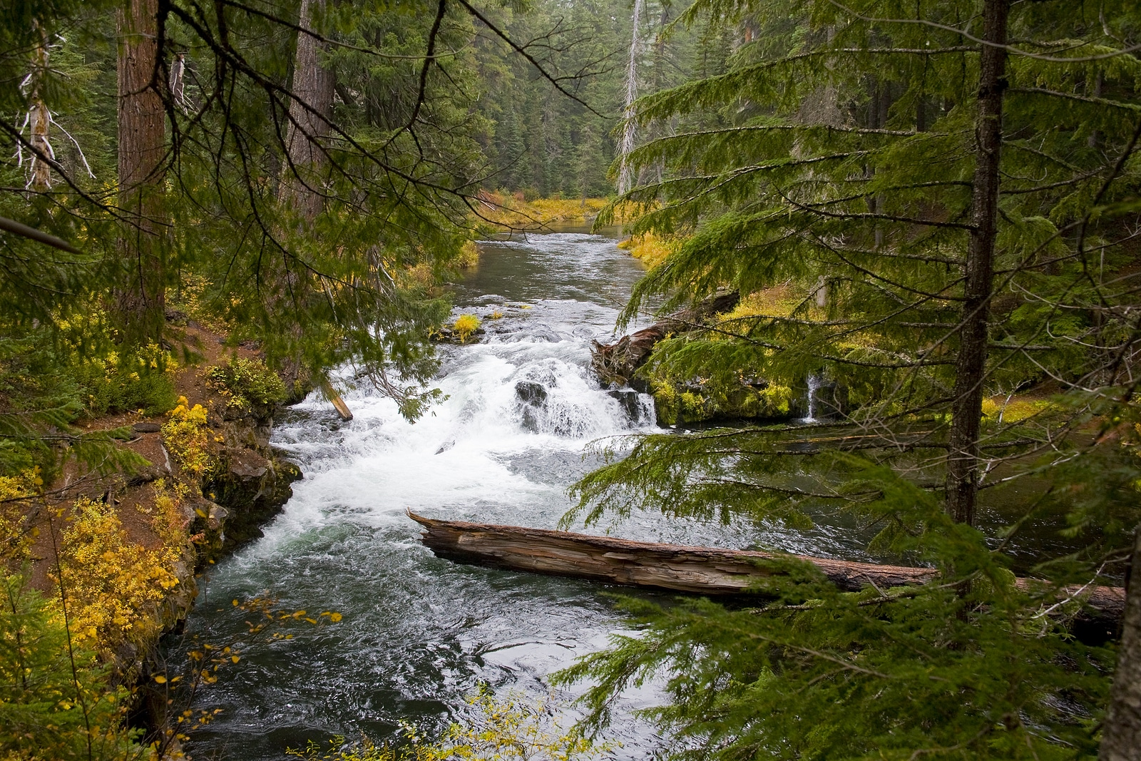 Wild and Scenic Rogue River in Southern Oregon